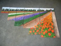 A photo of The Tulip Farm