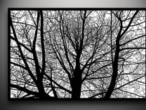 A photo of Branches